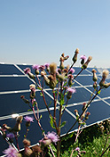 SYSTEM ELECTRIC Project: Solar power plants;